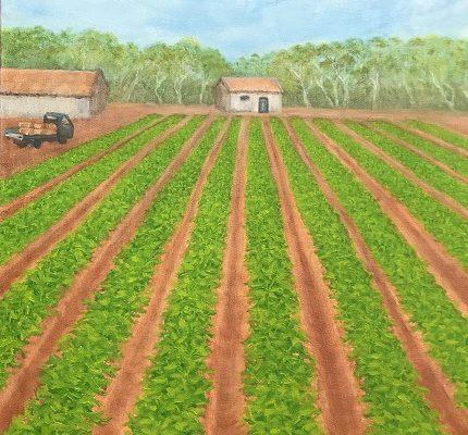 Carnarvon-Farm-Landscape-Painting-Sue-Helmot-Artist