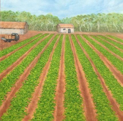 Carnarvon Farm oil on canvas by Sue Helmot Artist who is based in Carnarvon in the Gascoyne region of Western Australia