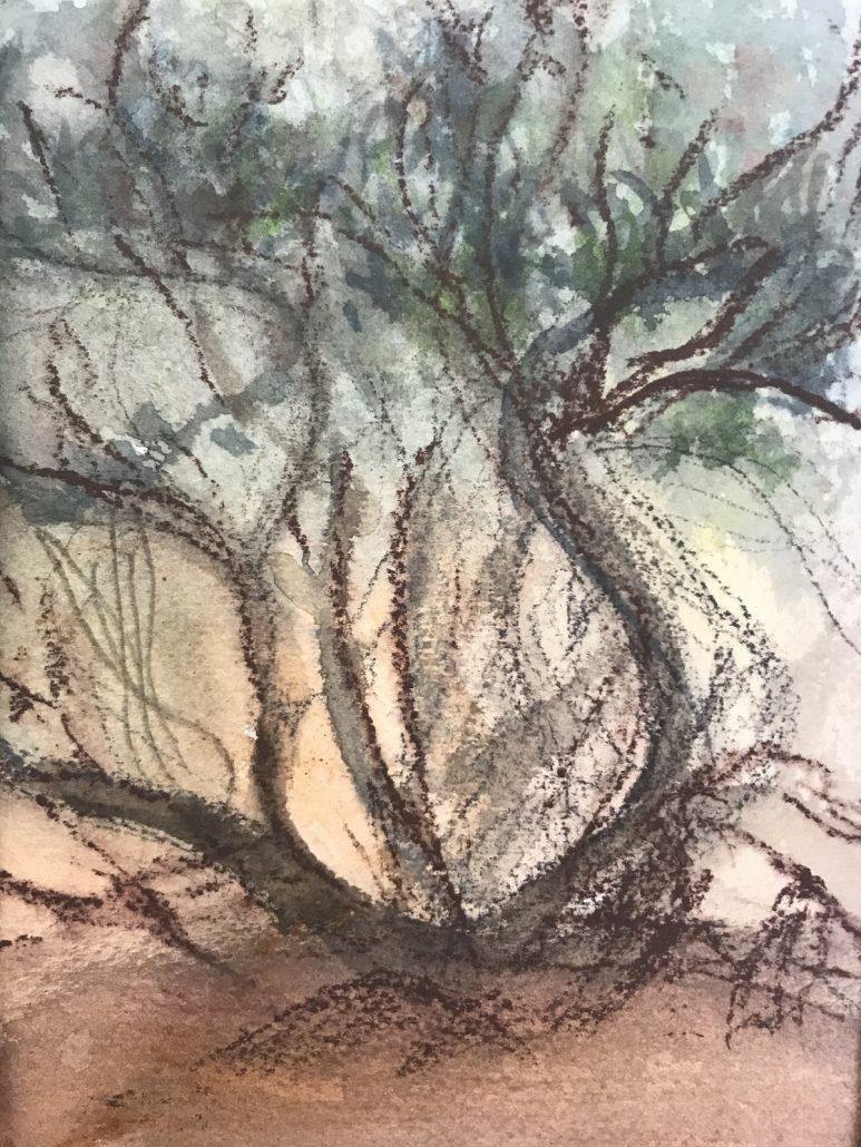 Mulga Scrub Watercolour and conte on Arches paper Sue Helmot Australian Artist